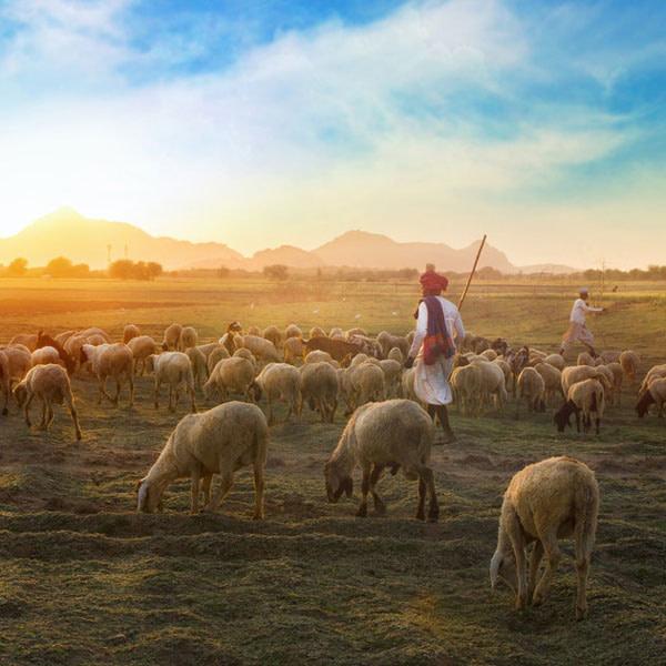 Pilda Păstorului cel Bun