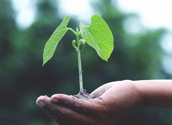 Despre creșterea spirituală